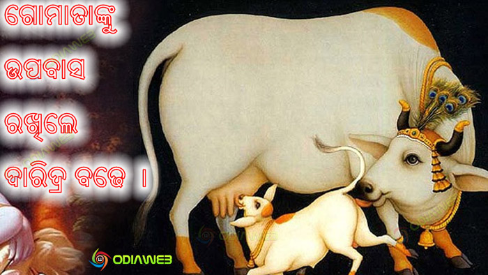 Cow-Puja-In-Odisha-Festival