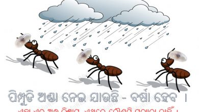Photo of Ant Carrying Eggs – Odia Andhabiswas Superstition Facts You Should Know