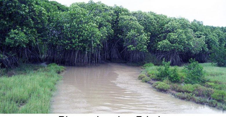 Bhitarakanika, Odisha