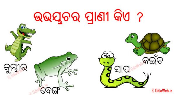 Facebook Odia Questions and Comment 2016