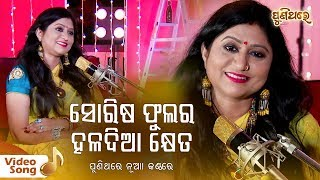 Photo of Odia Video Song Sorisa Phulara Haladia Kheta by Namita Agrawal.