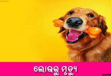 Odia Short Story Lobharu Mrutyu