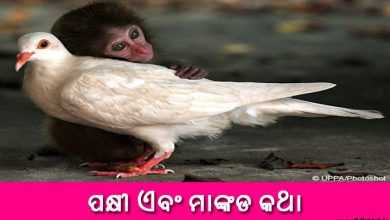 Photo of New Odia Short Story Pakhi o Mankada Katha
