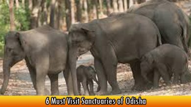6 Must Visit Sanctuaries of Odisha