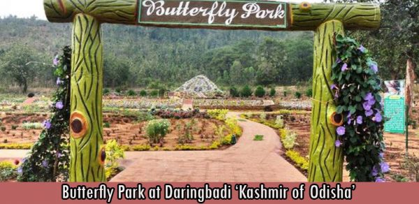Butterfly Park at Daringbadi 'Kashmir of Odisha'