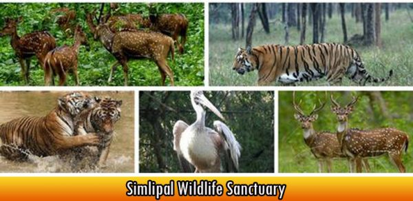 Simlipal Wildlife Sanctuary