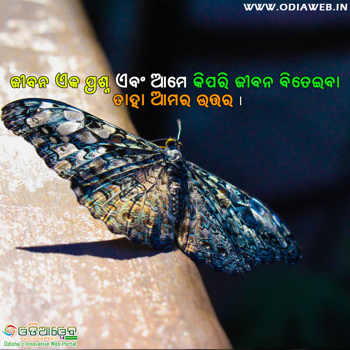 Life Odia Quotes