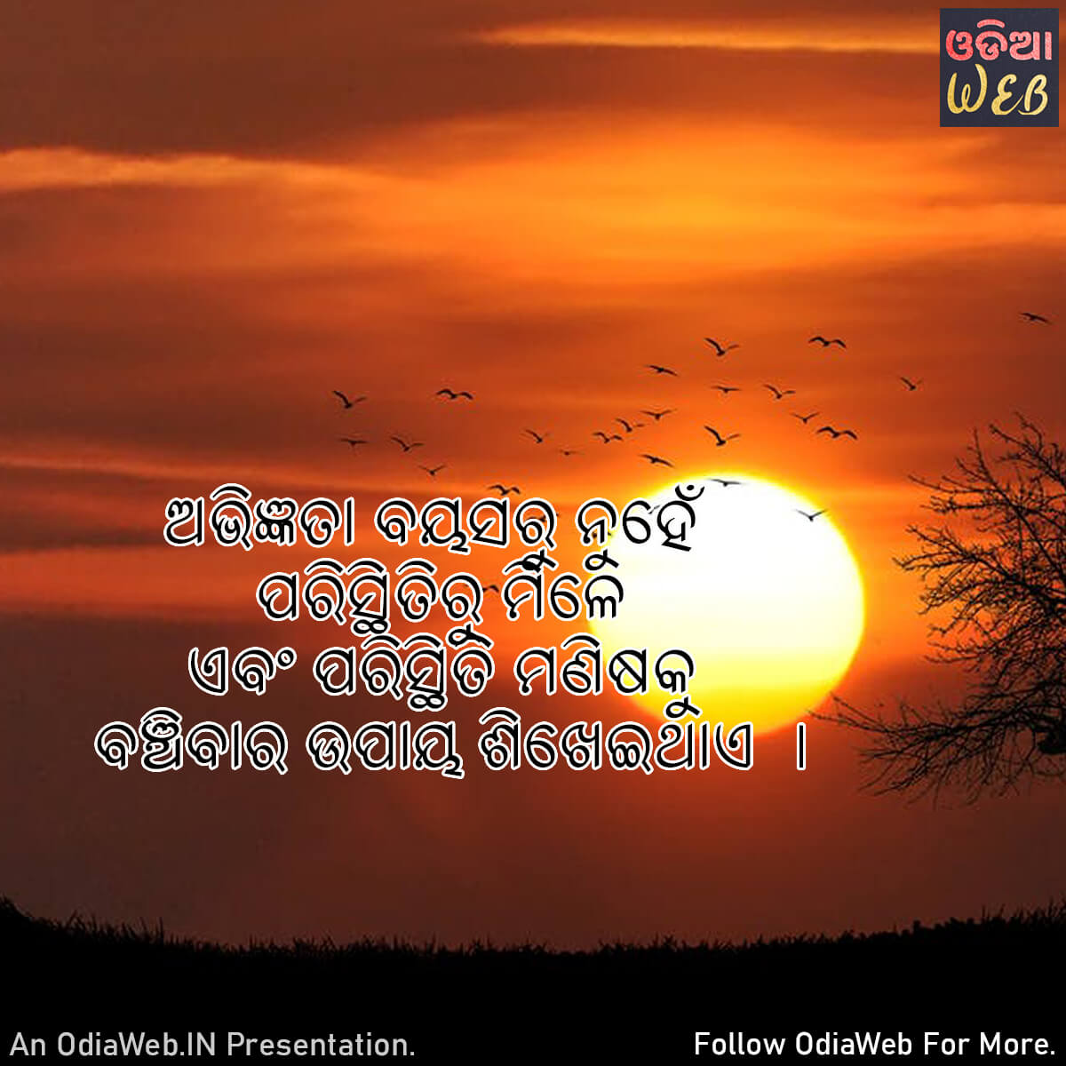 Odia Experience Quotes1