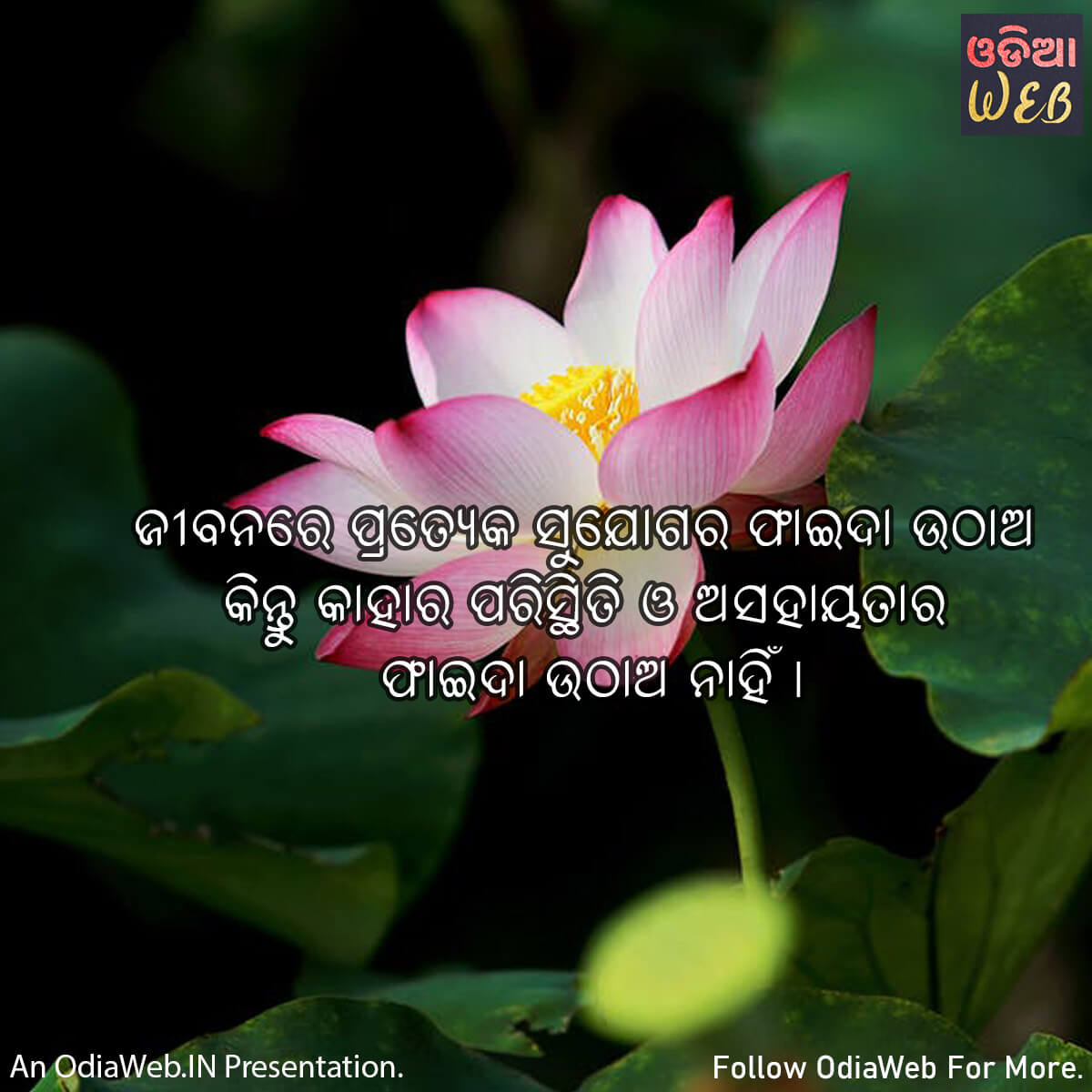 Odia Life Quotes2